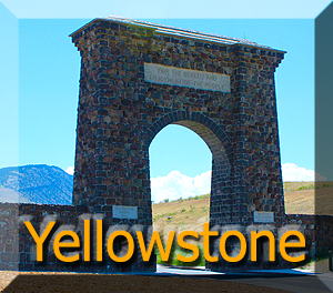 Yellowstone Button